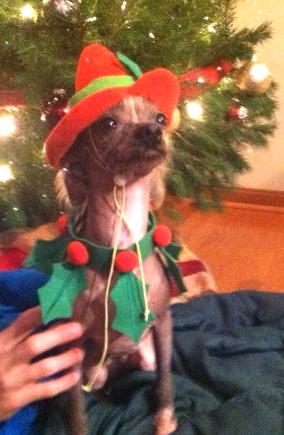 Alexandra-Dog-For-Adoption-Mutts-Matter-Rescue-Love-Coast-Blog