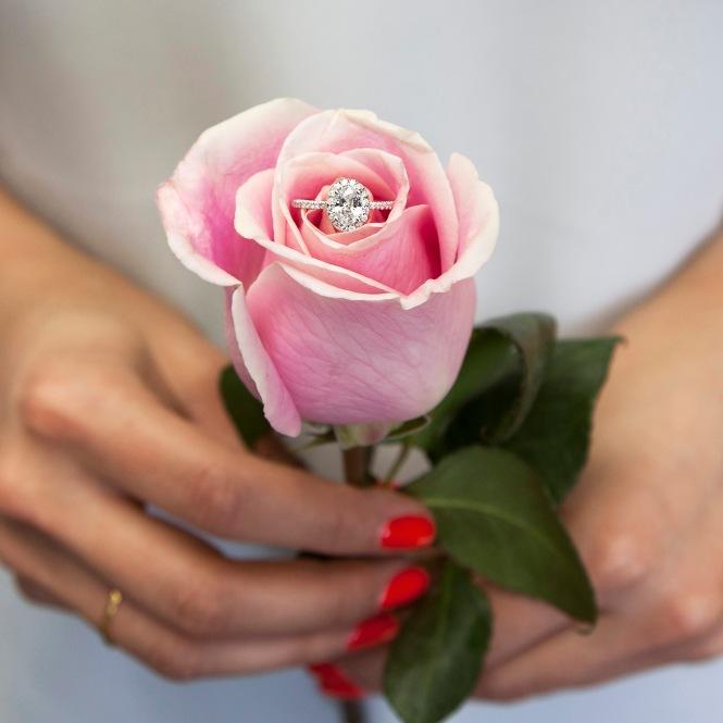 LC10233_rose